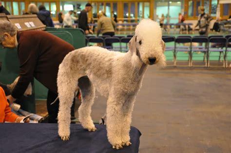 oddball dog breeds  show natures excellent sense
