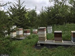 Iowa vandals kill 500,000 bees after knocking over hives ...