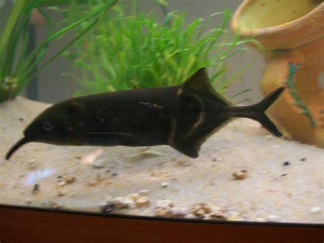 les plus beaux aquarium de le plus beau poisson de votre aquarium page 3