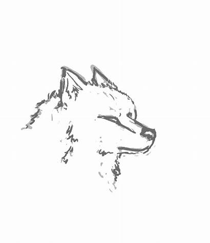 Wolf Head Animation Howl Animated Moving Animations