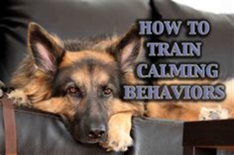 cat language  big     training