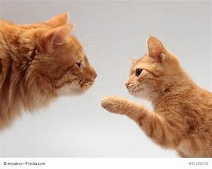 Wie Fange Ich Eine Katze : katzenerziehung wie erziehe ich meine katze ~ Markanthonyermac.com Haus und Dekorationen