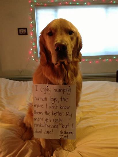 Dogs Dog Humps Shaming Naughty Hugs Confessions