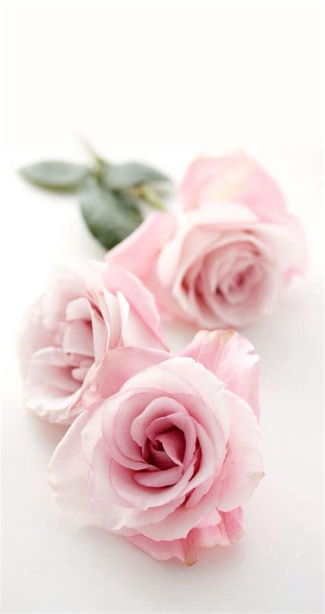 wallpaper shabby chic best 25 pink flower wallpaper ideas on pink