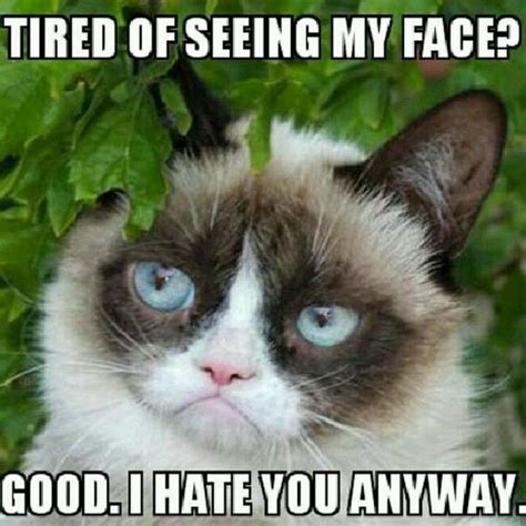 Grumpy Meme Face - angry memes funny angry pictures