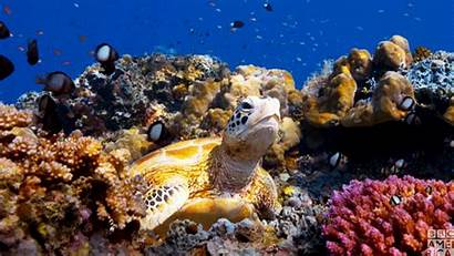 Turtles Planet Sea Bbc America Earth Species