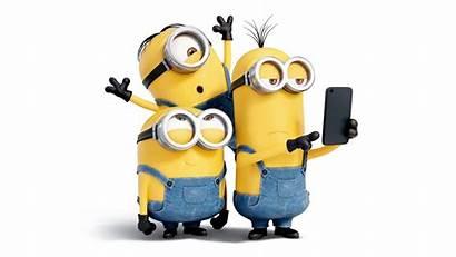 Bob Minion Minions Kevin Stuart 4k Mobile
