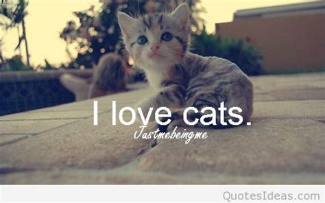 quotes  cats  cats wallpapers