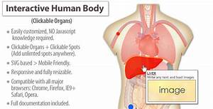 Interactive Human Body Organs Diagram By Art101