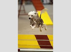 Rover Oaks Pet Resort In Houston To Offer Agility Classes