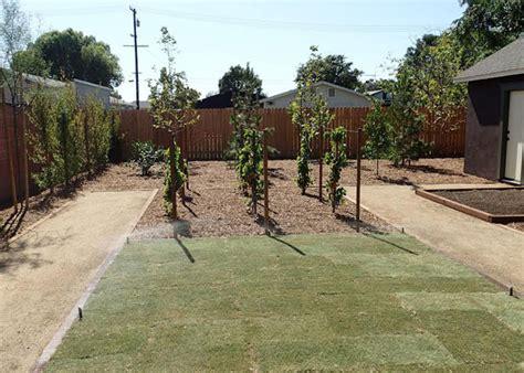 df landscape gallery drought tolerant landscaping
