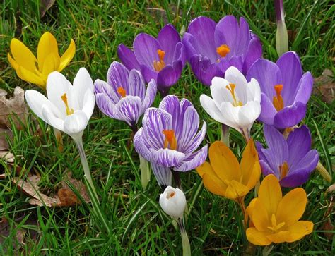 how and when to plant bulbs powerscourt garden