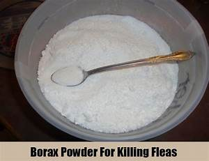 Borax carpet fleas meze blog for How to kill fleas on wood floors