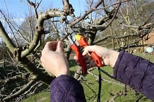 Apfelbaum Wann Schneiden : gartentipp obstb ume richtig schneiden ~ Frokenaadalensverden.com Haus und Dekorationen