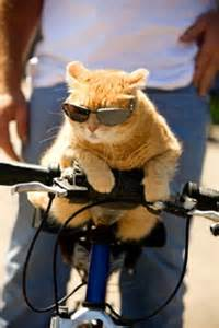 cat on a bike bike snob nyc the indignity of commuting by bicycle freds