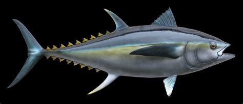 tuna fish bluefin tuna fish mount and fish replicas coast to coast