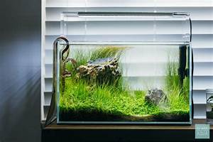 Ultum Nature Systems 5n Planted Nano Tank Gallery