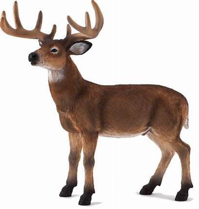 Deer Buck Tailed Mojo Toy Animal Figure