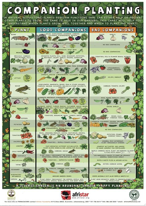 companion planting guide diy  die survival   post