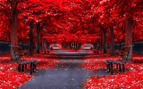 Free Easter Background Pictures Red Autumn Park Alley In The Mirror