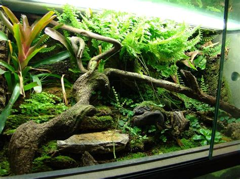 images  diy terrarium  pinterest