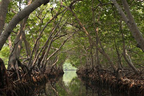 Mangrove Habitat Profile