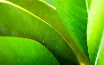 Pflanzen Plant Plants Widescreen Kontakt 1920 1200