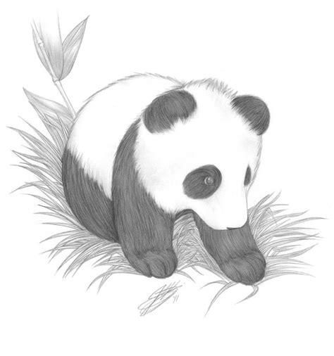 drawn baby animal baby panda pencil   color drawn