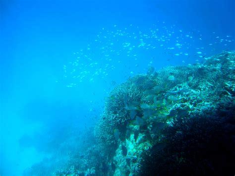 great barrier reef underwater budget travel