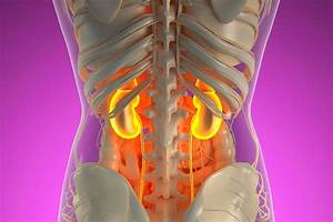What You Need To Know About Your Kidneys  U2013 And How To Keep