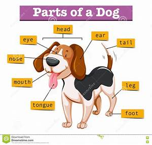 Diagram Showing Parts Of Dog Stock Vector