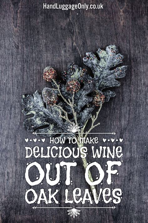 How To Get Wine Out Of A by How To Make Delicious Wine Out Of Oak Leaves