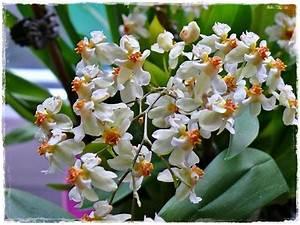Schöne Orchideen Bilder : die sch nsten orchideen bilder page 4 mein sch ner garten forum ~ Orissabook.com Haus und Dekorationen