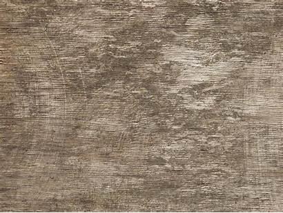Textures Texture 3d Wood Tree Carpet Bark