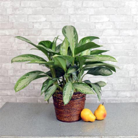 low light indoor plants 15 best low light indoor plants