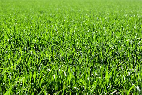 erba per giardino tipi di erba da giardino affitto giardino