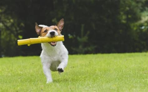 calculate dog years step  step diy instructions
