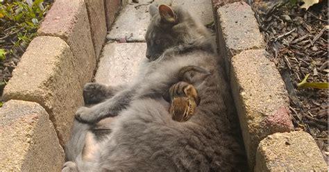 cat  chipmunk   friends  cuddle buddies