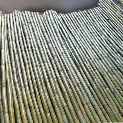 stuoie di canne home www falangainblu