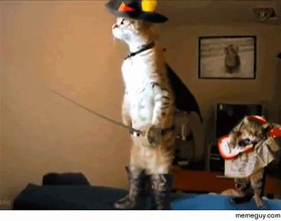 Cat Costume Gifs Giphy
