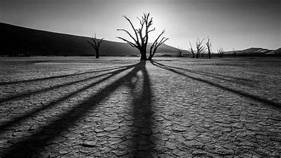 Desert 4k Drought Background Grayscale Plants Ultra