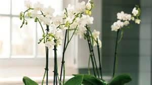 Plantes De Bureau Sans Soleil by Quelles Plantes D Int 233 Rieur Choisir Pour Une Pi 232 Ce Peu