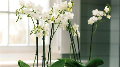 plante pour le bureau quelles plantes choisir pour le bureau