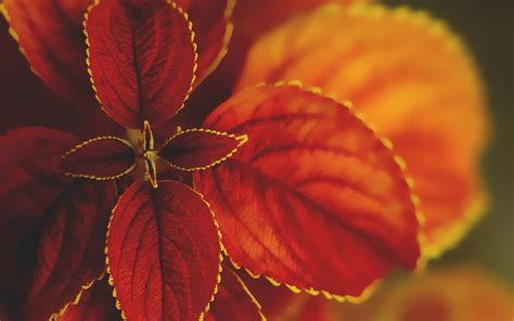 macro nature wallpapers hd wallpapers id