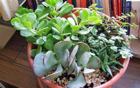 tanaman hias cocok dipajang rumah minim