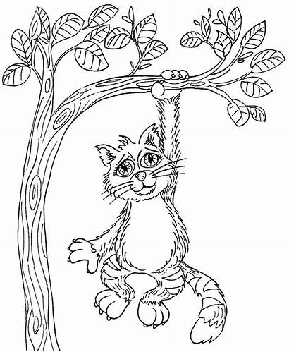 Hang Cat There Coloring Pages Kitty Line
