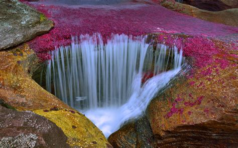 cano cristales river  colombia  amazingly beautiful