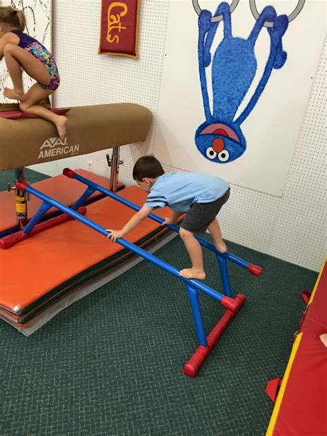 preschool cats gymnastics 831 | image