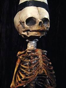 1000  Images About Skeletons An Bones On Pinterest