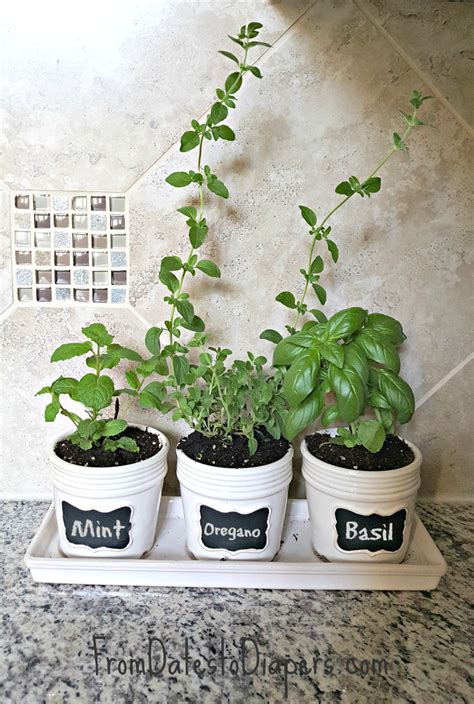 Kitchen Herb Garden  From Dates To Diapers™